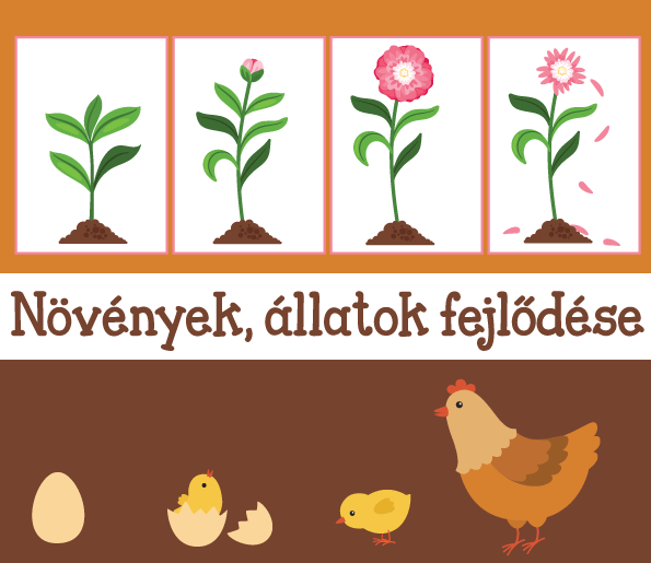 Növények, állatok fejlődése – időbeli sorrend